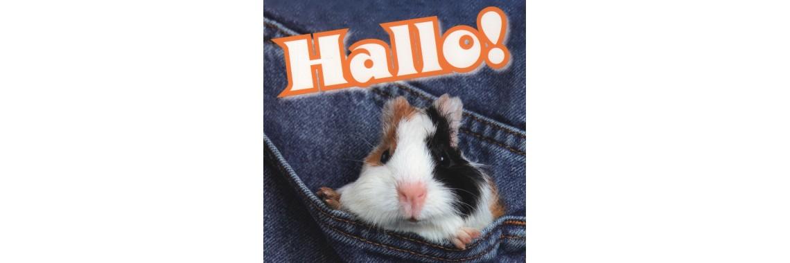 kaartje Hallo!